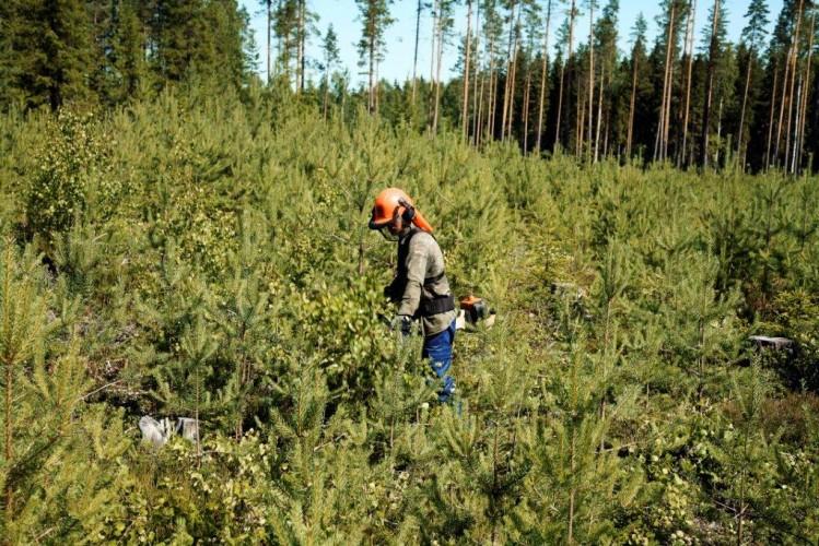 Metsärahastot eivät aja metsänomistajan etua