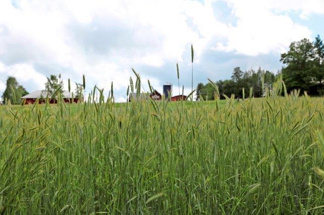 Maatilan velkavipu