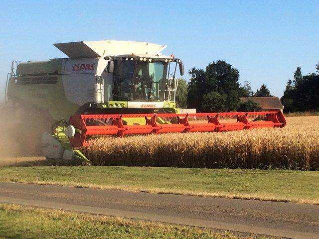 Wheat_harvest_Barret