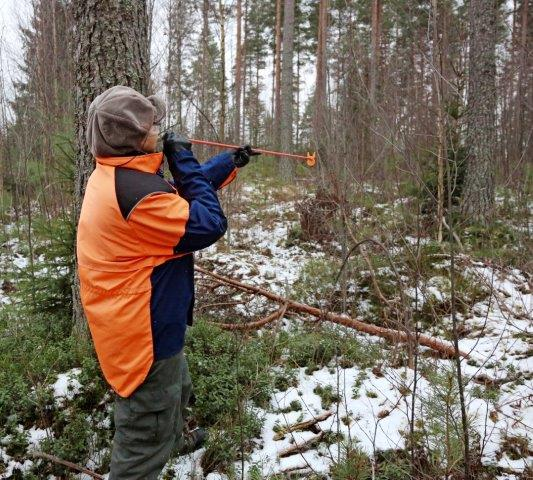 Metsävaratietojen julkisuus lisää riskejä