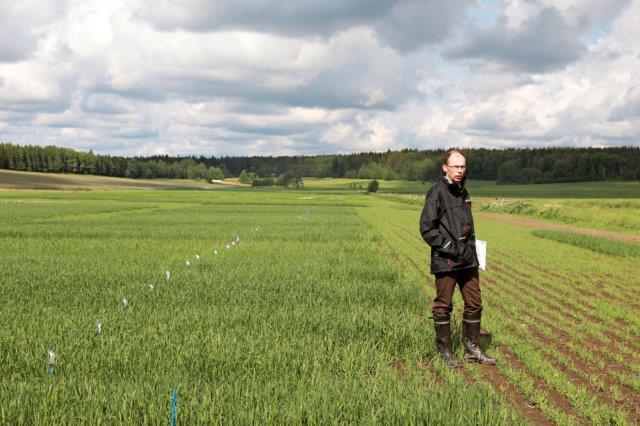 Peltopäivän lajikekentältä signaalit viljelysuunnitteluun