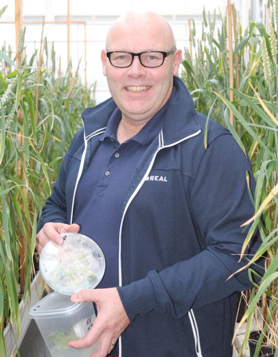 Yhtenä työkaluna kevätvehnän lajikkeiden kehityksessä olemme ottaneet mukaan geno-mivalinnan, jonka avulla pystymme nopeuttamaan jalostustyötä, kertoo Mika Hyövelä Boreal Kasvinjalostuksesta.