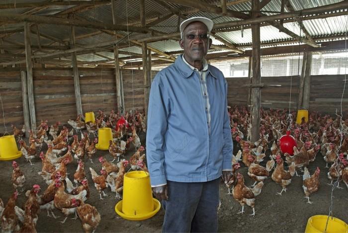 Tilalla on noin 4000 munivaa kanaa. Munat myydään Kongoon.