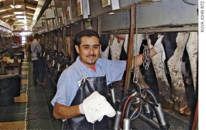 Työvoiman saanti ja hinta vaihtelevat maitotiloilla eri puolilla maailmaa. Kaliforniassa, josta kuva tulee, aputyövoimaa saa halvemmalla kuin monessa muussa maassa. Australiassa lypsäjän kustannus on jopa kaksinkertainen Kaliforniaan nähden.