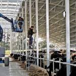 Uuden-Seelannin maitotiloilla on pitkään ollut vain laidunta ja lypsyasema. Ympäristösäädökset vaativat nyt maidontuottajia investoimaan karjasuojiin, jotta ravinnepäästöjä voidaan rajoittaa.