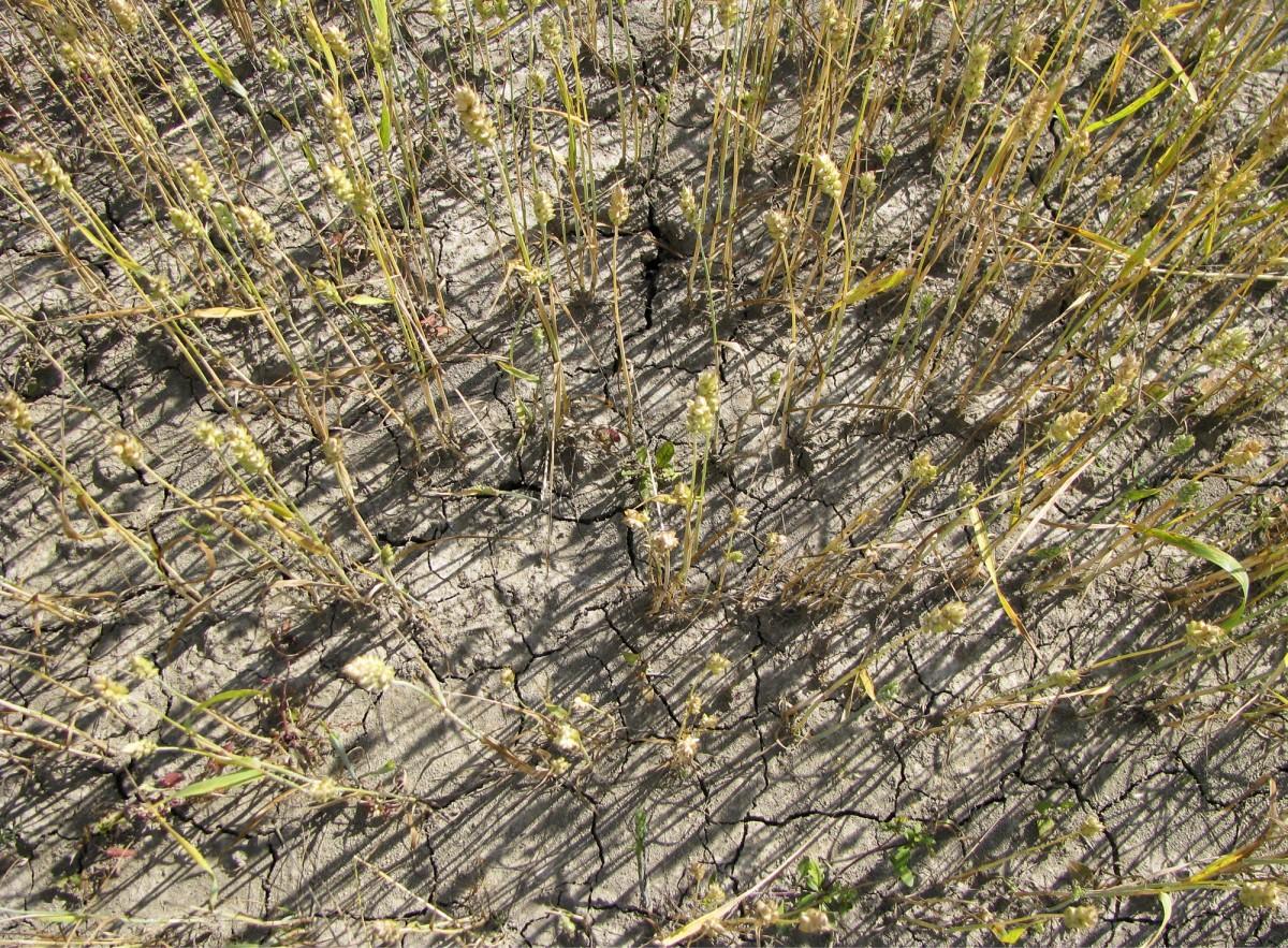 Korkeisiin satoihin satsaavat viljelijät eivät ole saaneet korvausta vanhasta satovahinkojärjestelmästä.