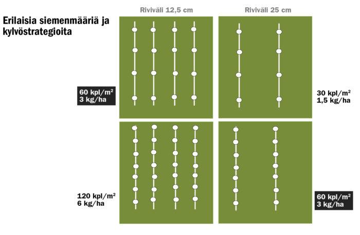 Ennen kokeen kylvöä laskettiin kylvösiemenmäärät (kg/ha) ja tehtiin kiertokoe. Pienin siemenmäärä (3,7 kg/ha) vastasi tiheyttä 80 kpl/m2 joka vantaalla ja 40 kpl/m2 joka toisella vantaalla. Tästä siemenmäärät kasvoivat vastaavasti tiheyden kasvaessa. Kun siemenmäärä puolitetaan sulkemalla vantaat, säilyy siementen välinen etäisyys kylvösuunnassa samana. Asiaa havainnollistetaan oheisessa havainne-kuvassa. Samalla rivillä olevissa laatikoissa on kylvökoneen säädöt samat. Mustalla värjätyillä on siemenkustannus (€/ha) sama.