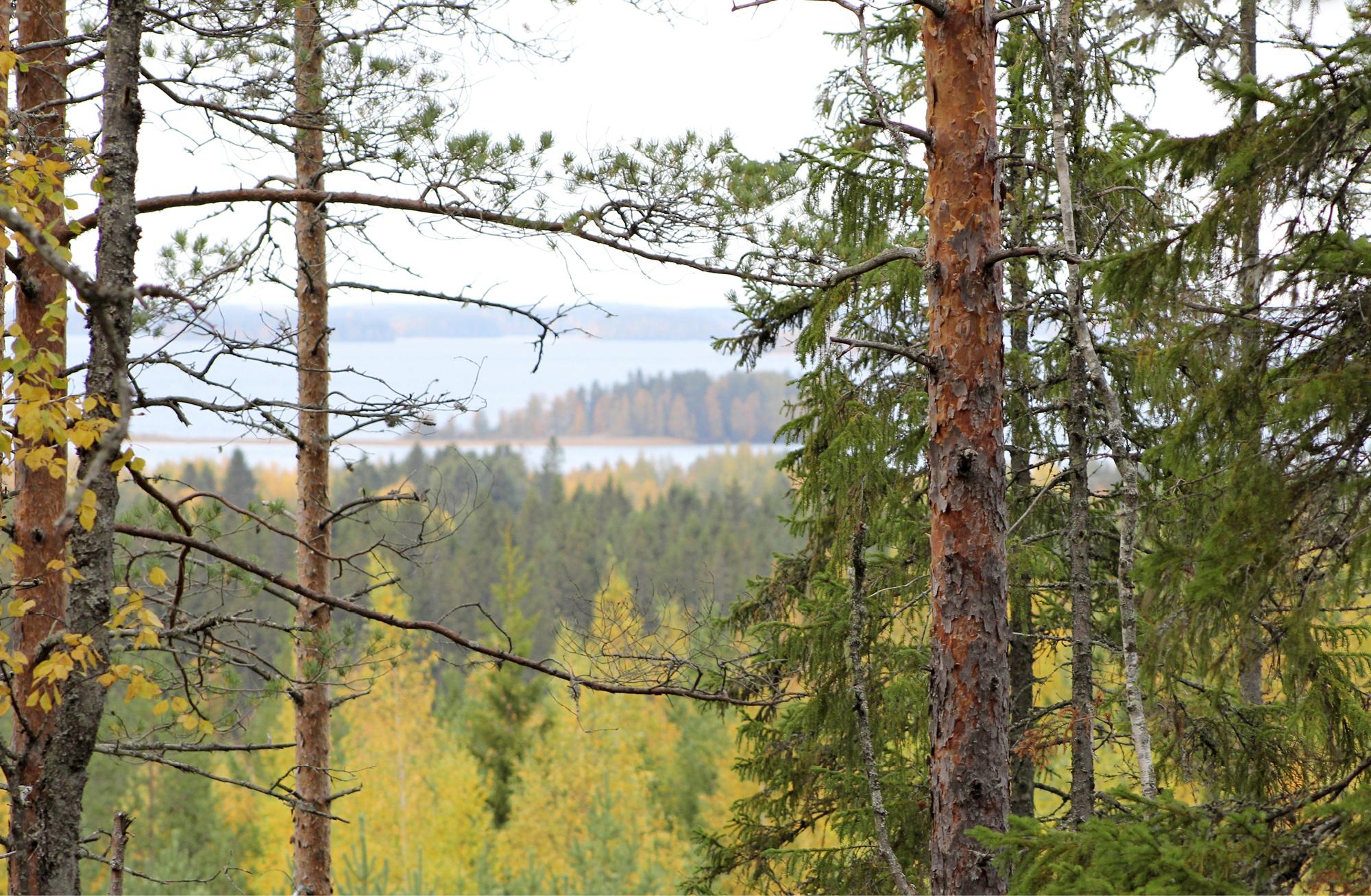 Metsän suojassa hoivaa ja voimaa